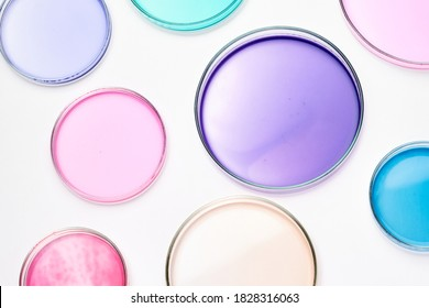 Petri dish with colorful liquid or media for bacterial colonies in biomedical analysis. Grafting bacteria in the petri dishes