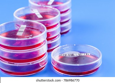 petri dish with red agar