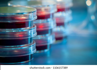 Petri dishes in blue light material. Laboratory concept.