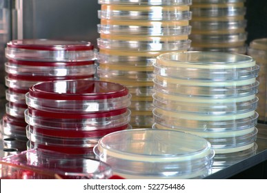 Petri dishes with culture media in the lab incubator / detail of stove with plates and culture media of the laboratory