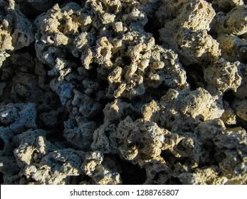 Petrified coral in the Garabogaz-Gol gulf.