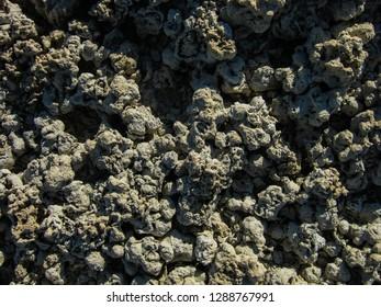 Petrified coral in the Garabogaz-Gol gulf, Turkmenistan.
