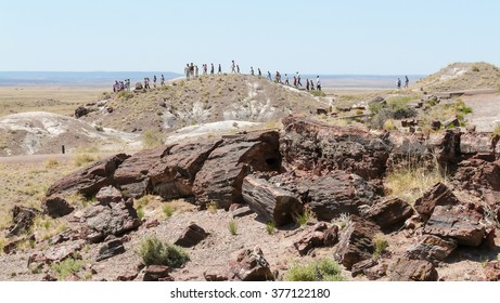 Petrified Forest, Arizona - May 20 2008: A group of people walking in Petrified Forest National Park, at front fossils (petrified wood).