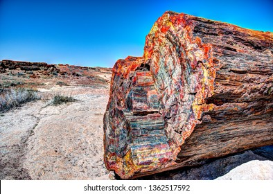 Petrified Forest multicolored wood
