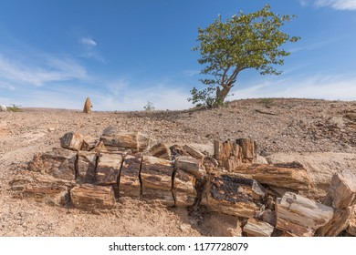 Petrified and mineralized tree trunk in the Petrified Forest National Park at Khorixas, Damaraland, Namibia.