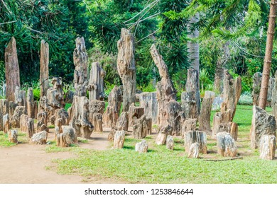 Petrified trees in National Kandawgyi Botanical gardens in Pyin Oo Lwin, Myanmar