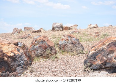 Petrified wood in Petrified Forest