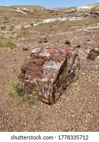 Petrified wood in the petrified forest