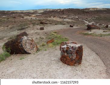 Petrified wood in Petrified Forest National Park, Arizona, United States of America (USA)