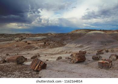 Petrified wood in Petrified Forest National Park, near Holbrook, Arizona, USA