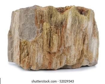 Petrified Wood isolated in white background