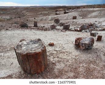 Petrified wood logs, Petrified Forest National Park, near Holbrook, Arizona, United States of America (USA)