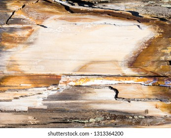 Petrified wood texture background from ancient tree at Ginkgo Petrified Forest State Park, WA, USA