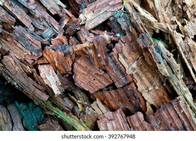 Petrifying Wood