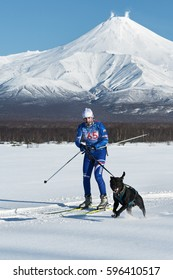 PETROPAVLOVSK, KAMCHATKA PENINSULA, RUSSIA - DEC 10, 2016: Skijoring - competition for Cup of Kamchatka Region on background of Avachinskaya Sopka. Skier-racer Klimov Ivan and sled dog metis Butch.