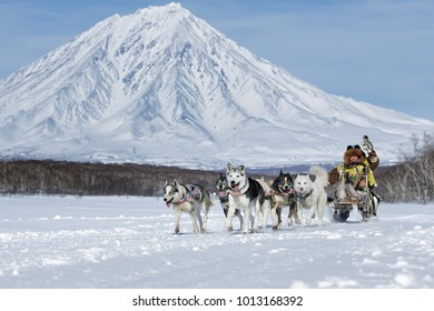 PETROPAVLOVSK, KAMCHATKA PENINSULA, RUSSIA - FEB 25, 2017: Running sled dog team Kamchatka musher Roman Mandyatov. Kamchatka Sled Dog Racing Beringia, Russian Cup of Sled Dog Racing (snow disciplines)