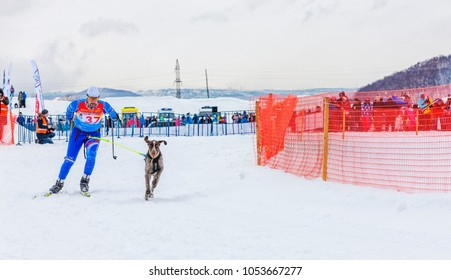 "PETROPAVLOVSK, KAMCHATKA PENINSULA, RUSSIA - Mart 10, 2018: Winter sports festival.  Skijoring - competition on Kamchatka on holiday ""Snowy path"""