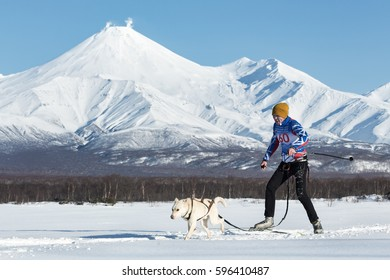 PETROPAVLOVSK, KAMCHATKA, RUSSIA - DEC 10, 2016: Skijoring - competition for Cup of Kamchatka Region on background of Avacha Volcano. Skier-racer Tishkin Vitaly, sled dog Alaskan husky nicknamed King.