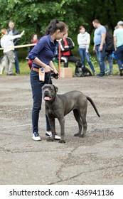 Petropavlovsk KAZAKHSTAN, June 12, 2016: Exhibition of domestic dog, holiday, 11-12 June, city Petropavlovsk, Kazakhstan.