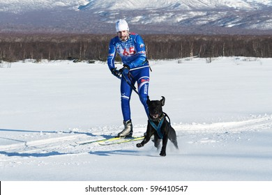 PETROPAVLOVSK-KAMCHATSKY, KAMCHATKA PENINSULA, RUSSIA - DEC 10, 2016: Sportsman skier-racer Klimov Ivan and sled dog metis Butch. Skijoring (skijor races) - competition for Cup of Kamchatka Region.