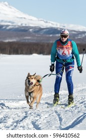 PETROPAVLOVSK-KAMCHATSKY, KAMCHATKA PENINSULA, RUSSIA - DEC 10, 2016: Kamchatka sportswoman skier-racer Bahur Anna and sled dog Laika named Alma. Skijoring - competition for Cup of Kamchatka Region