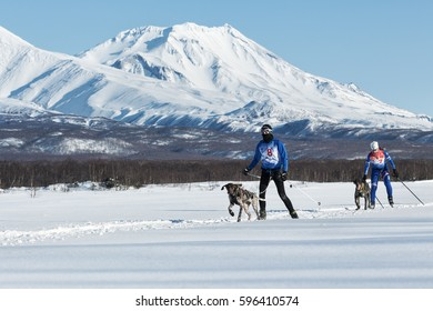 PETROPAVLOVSK-KAMCHATSKY, KAMCHATKA PENINSULA, RUSSIA - DECEMBER 10, 2016: Skijoring - competition for Cup of Kamchatka Region on background of beautiful Kozelsky Volcano.