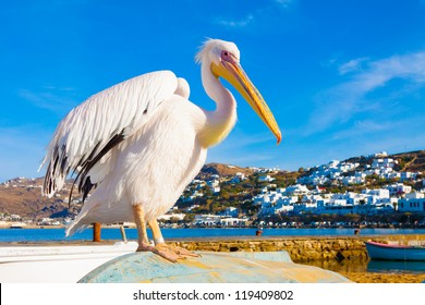 Petros, the famous pelican of Mykonos island standing on a boat by sea and posing, Mykonos island Greece Cyclades