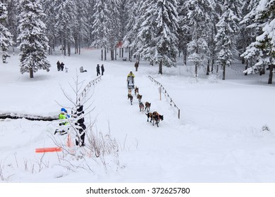 PETROZAVODSK, RUSSIA - JANUARY 24TH, 2016: Sled Dog Race, dog team during the skijoring competition on the winter road