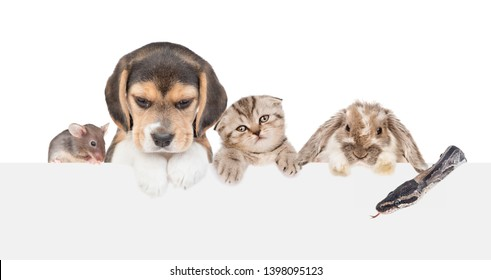 Pets  above empty white banner. isolated on white background. Empty space for text