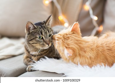 pets, christmas and hygge concept - two cats lying on sofa with sheepskin at home in winter