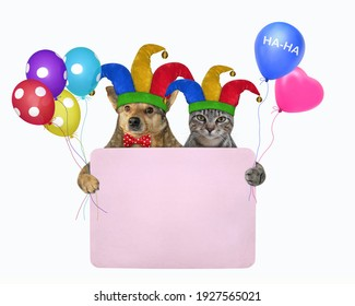 Pets clowns in jester hats is holding a pink blank poster. April fool's day. White background. Isolated.