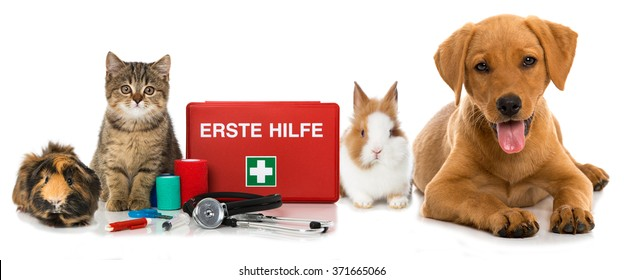 Pets first aid