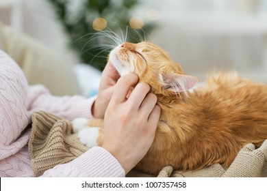 pets, hygge and people concept - close up of female owner stroking red tabby cat in bed at home