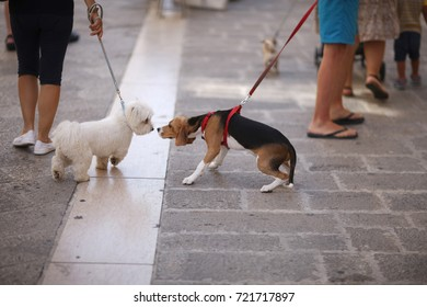Pets on leashes for a walk with the owners on the city street