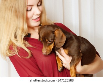 Chihuahua and Dachshund Mix Images, Stock Photos & Vectors