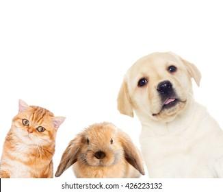pets set