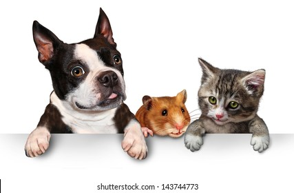 Pets sign for veterinary medicine and pet store or animal adoption advertising and marketing message with a cute dog hamster and a cat hanging on a horizontal white placard with copy space.