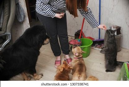 Pets training in home
