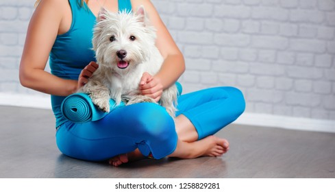Pets yoga practice closeup picture