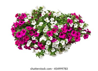 petunia flowers, clipping path included, VOL. 2