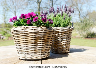 petunia and lavender in the basket  flowering in the garden on wooden table in summer