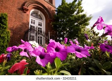 petunias in church yard