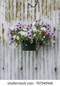 Petunias and other flowers in a plastic pot hanging next to a rusting corrugated exterior wall, for themes of juxtaposition and decoration, corrosion, spring