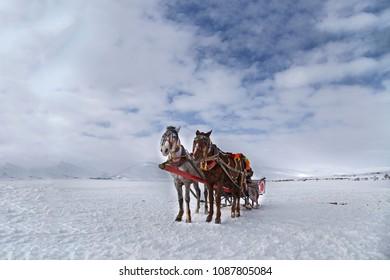 Phaeton horses pulling sleigh in winter - on Cildir Lake in Ardahan nearby Kars.