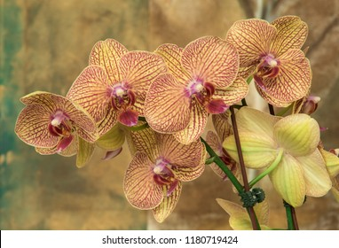 Phalaenopsis orchid against an abstract background