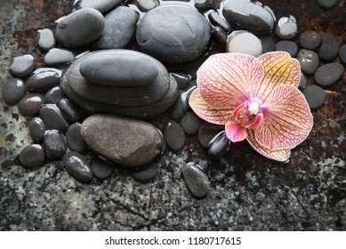 Phalaenopsis orchid with black river stones for spa concept