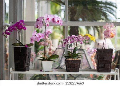 Phalaenopsis orchid in the ceramic vase this is beautiful orchid for any decorate to create felling fresh