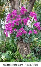 Phalaenopsis orchid flower decoration in garden outdoor