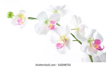 phalaenopsis orchid isolated on a white background