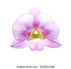 Phalaenopsis,  Pink orchid flower isolated on white background. with clipping path